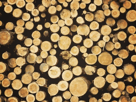 illustration of natural pine lumber background Stock Vector - 9930617
