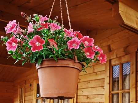 flower pot dangling from the roof of the house photo