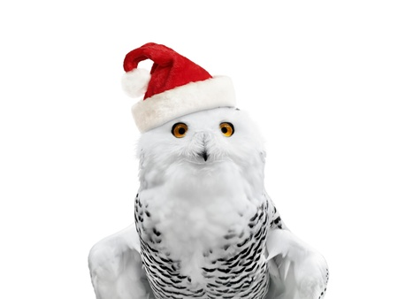 hat with feather: New year owl in Santa hat over white background
