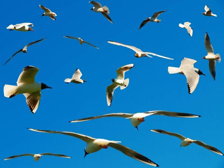 air animals: A lot of seagulls in the blue sky Stock Photo