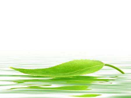verdant: Single green leaf over the water  Stock Photo
