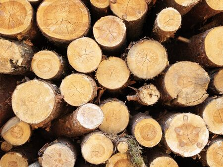 balk: Photo of the cut out logs