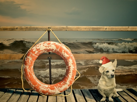 life preserver: mongrel dog waiting for the Christmas at the marina Stock Photo