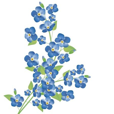 Darstellung der Vergissmeinnicht-Blumen nicht über weißem Hintergrund Vektorgrafik