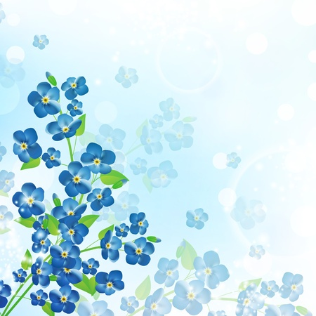 forget me not: illustration of the forget-me-not flower background