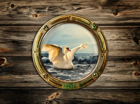 porthole with view at swan on the sea photo