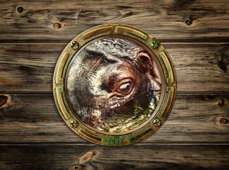 porthole with hippopotamus eye in water photo