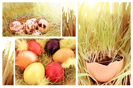 Easter set: different backgrounds with eggs and green grass photo