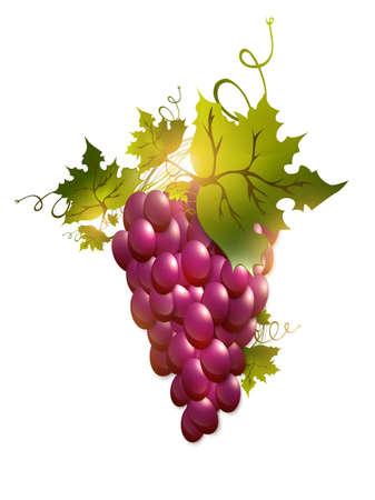 illustration of red grape over white background