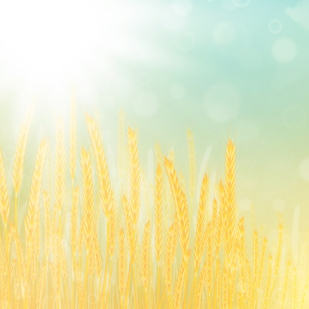 illustration of wheat field in sunny day Vectores