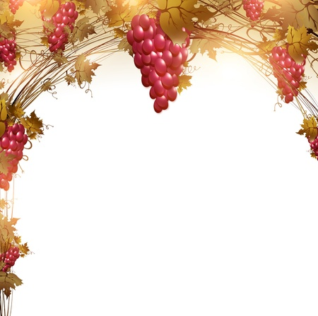 red grape: Illustration of red grape vine frame with copyspace for your text