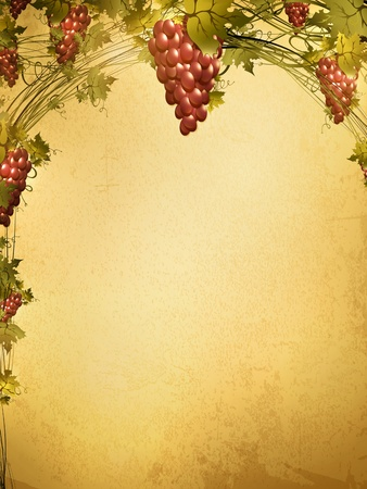 red grape: Illustration of red grape vine frame at grunge background with copyspace for your text