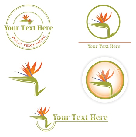 different designs with orange Bird of paradise flower (Strelitzia) Vector