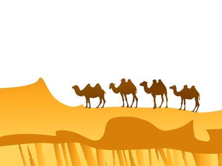 scorching: camel caravan in the desert over white background