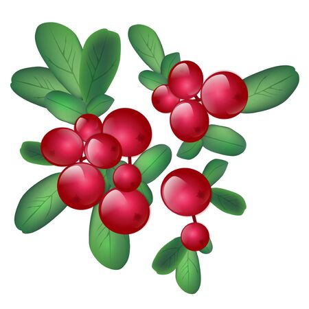 wild berry: Cranberries With Green Leaves Over White Background