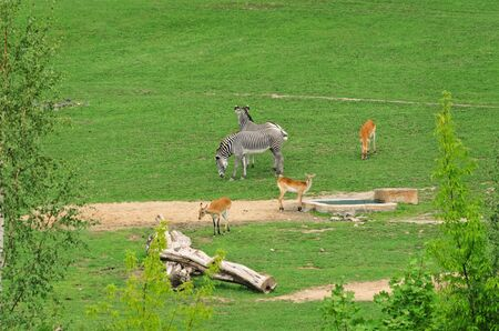 hoofed: Group Of Hoofed Mammals On The Nature Stock Photo
