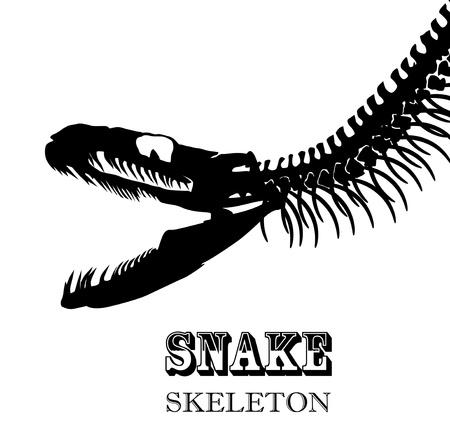 ghastly: Snake Skeleton In Black and White
