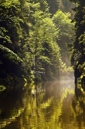 czechia: Kamenice River Flowing Between Rocks With Trees