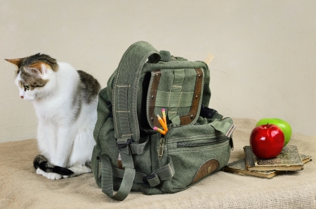 packsack: Cat Sitting Near The Backpack On The Linen Cloth