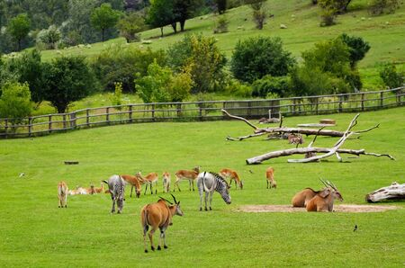 hoofed: Different Hoofed Animals At The Pasture Field
