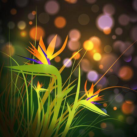 ave del paraiso: Ave del paraíso Flores (Strelitzia) Sobre Fondo luz de la noche Vectores