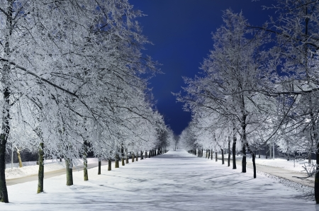 hoar: Winter Alley With Snowy Trees In The Night