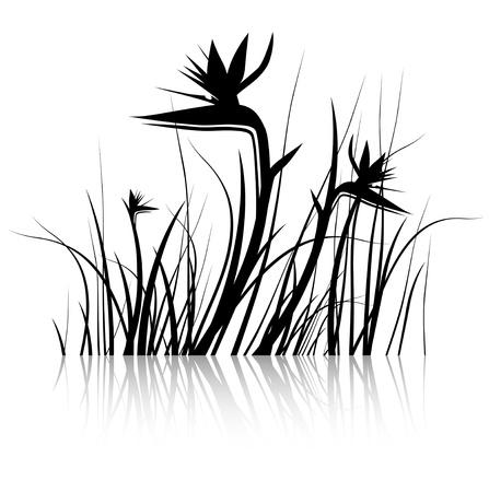 ave del paraiso: Bird of Paradise Flower (Strelitzia) Silueta de Negro y Blanco