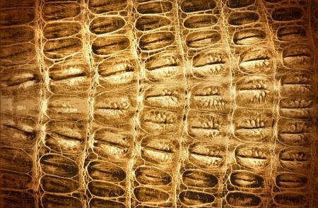 crocodile skin: Illustration of Natural Crocodile Leather Background