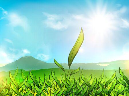 tea plantation: Illustration of Green Tea Plantation Over Mountain Landscape and Sun