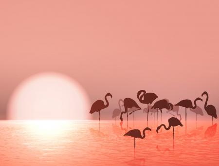 flamenco ave: Silueta del flamenco y la puesta del sol en el lago