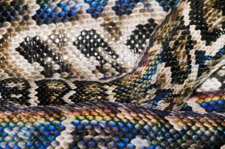 snakeskin: Snake Skin In Spectrum
