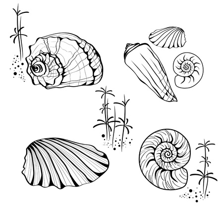 nautilus shell: Illustration Sea Shell and Snail Collection Over White