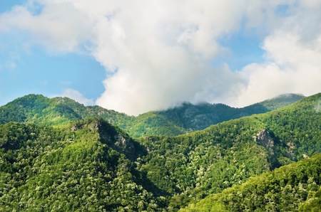 rumania: Carpathian Mountains Covered With Virgin Forests  Romania