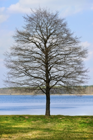 Bare Tree On The Bank Of The River Stock Photo