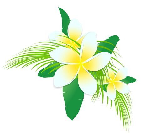 plumeria flower: Frangipani Tropic Flowers With Palm Leaves Over White Background Illustration