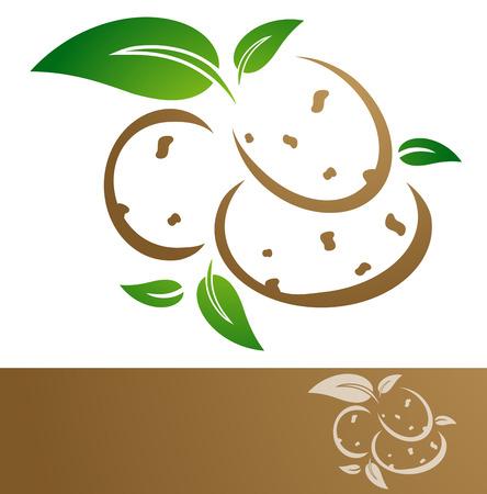 potato plant: Potato Illustration Over White Background