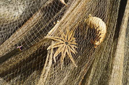 fishing net: Starfish And Lobster In The Fishing Net