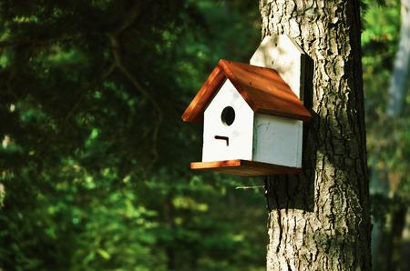 birdhouse: WHite Bird House On The Pine Tree