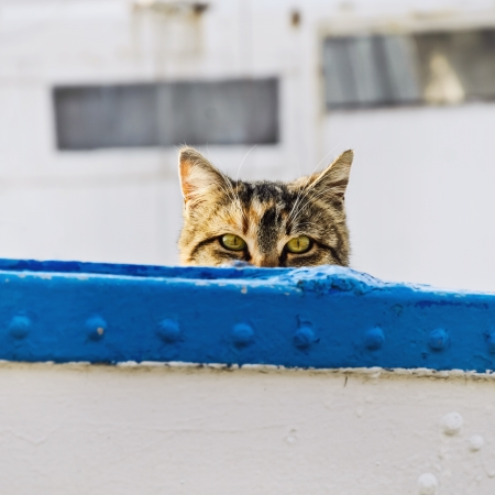 housecat: Cat On Board Of Small Fishing Boat
