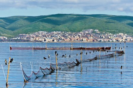 cormorants: Cormorants sitting on fishnets in front of city and mountains view