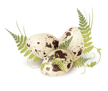 huevos de codorniz: Ilustración de los huevos de codornices adornada con helecho Sobre Blanco