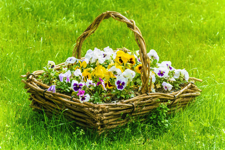 flamy: Bunch Of Flowers In The Basket Among The Grass Stock Photo