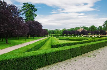 ornamental bush: Parkland In The Prague, Czech Republic