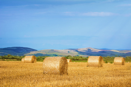 haystacks: Rural Landscape With Haystacks On The Field