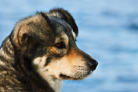 lop eared: Portrait Of Outbred Dog Against The Background Of The Sea