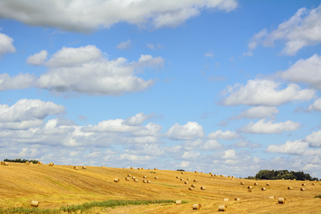 an agricultural district: A Lot Of Haystacks On The Field In Lithuania Stock Photo