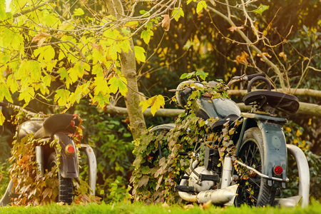 lobed: Old Motorcycle In Autumn Foliage