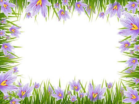 Illustration des Frühlings Lila Krokus Border Space Standard-Bild - 37883535