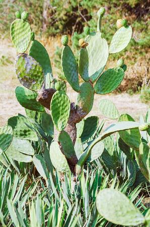 ecological environment: Cactus Stock Photo