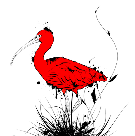 zoological: Illustration of Grunge Vintage Designed Eudocimus ruber or Red Ibis Over White Background